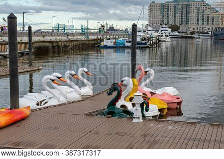 Swan Paddle Boat In The Lake Park Tuurist River
