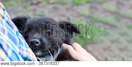 Found A Black Puppy With A Sad, Pleading Look. Dont Leave The Dogs. An Abandoned Little Puppy In His
