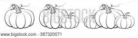 Orange Pumpkin Fruit. Autumn Harvest. Autumn Halloween Pumpkins. Edible Plants. Isolated Vector On W
