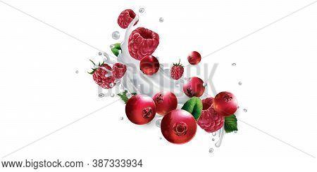 Cranberries And Raspberries In Splashes Of Milk Or Yogurt.
