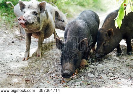 Wild Boar Piglets In Green Forest Look Into The Camera
