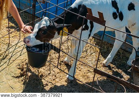 Girls Hand Touches And Strokes Young Curious Calf