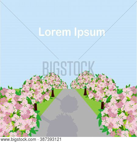Sakura Bluming Tree Near Road Landscape Blue Sky Lorem Ipsum Flat Design Art Design Stock Vector Ill