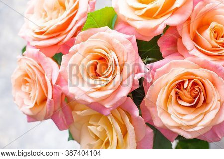 Floral Background. Cream, Pink And Orange Roses
