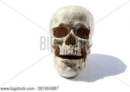 Human Skull. Spooky Halloween Human Skull. Isolated on white. Room for text.