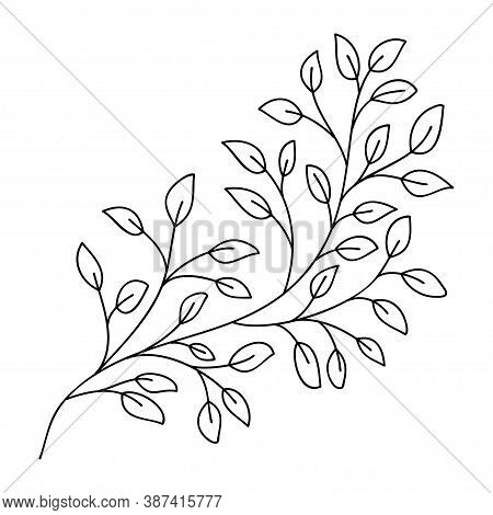 Hand Drawn Leaves And Branch Isolated On White. Doodle Birch Leaves For Design. Vector Illustration.