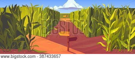 Cornfield With Wooden Road Pointers And High Green Plant Stems. Choice Of Way Concept. Landscape Wit