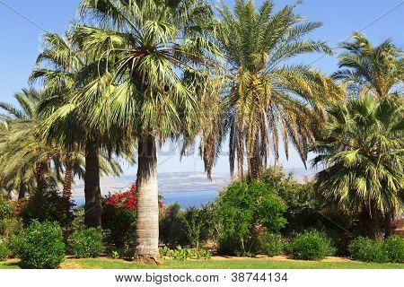 Israel,Sea of Galilee,  Mount of Beatitudes, gardens
