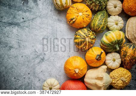 Beautiful colorful mini pumpkins on grac concrete background, holiday or autumn decoration. Fall concept. Top view, flat lay. Copy space for text