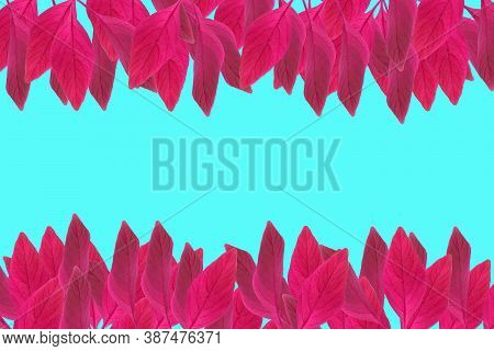 Leaves Of Amaranth Isolated On A Blue Background. Autumn Leaf Of Amaranth. Red Leaves.
