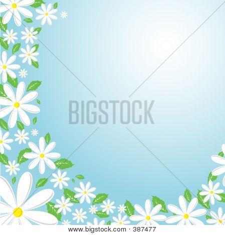Daisy achtergrond