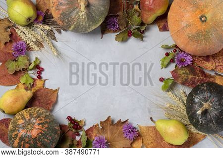 Frame With Autumn Harvest: Pumpkins, Pears, Leaves, Flovers, Viburnum And Ears Of Wheat On Gray. Tha