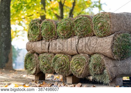 Close Up Of Pallets With Sod Turf Grass, Rolled Grass Lawn Is Ready For Laying. Lawn Service.