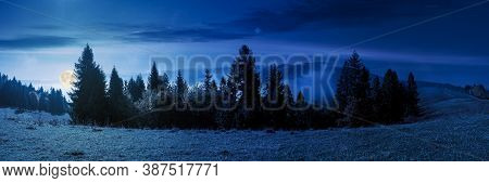Foggy Autumn Landscape Panorama At Night. Spruce Trees On The Meadow In Full Moon Light. Mountain Be
