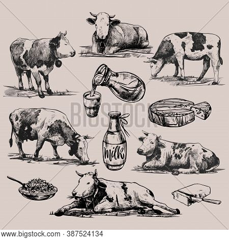 Farm Products And Alpine Cows Big Set Hand Drawn In A Graphic Style. Vintage Vector Engraving Illust