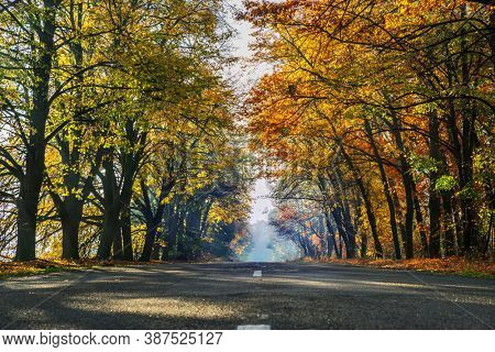 Beautiful autumn landscape with the yellow - orange trees, road and the sun's rays of the setting sun.