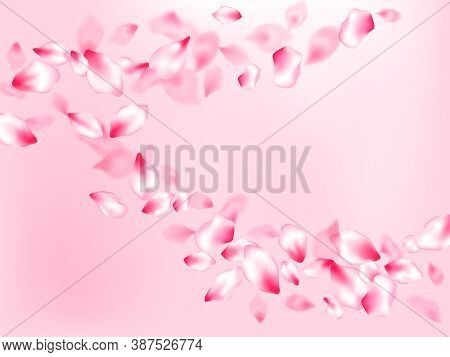 Spring Tree Flowers Parts, Airy Flying Petals On Rose Color Background. Anniversary Background. Past