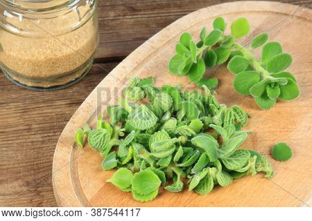 Making Syrup From Cut Indian Borage, Plectranthus Amboinicus. It Is Used As Curative And Food Plant.