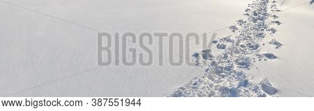 Panoramic View On Tracks Of Hiker Walked In Fresh Snow