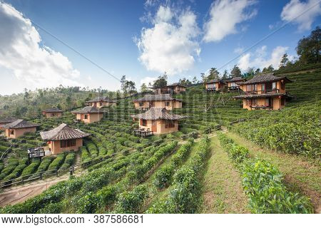 green tea farm with chines hut village on hill againts sky
