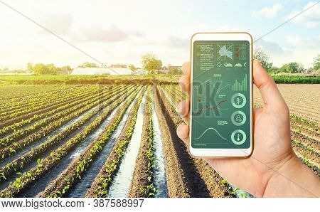 Farmer's Holds A Smartphone On A Background Of A Farm Field Plantation. Scientific Research. Agroind