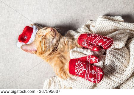 Happy Christmas Postcard With Text. Cute Little Ginger Kitten Sleeps With Xmas Hat On And Red Mitten