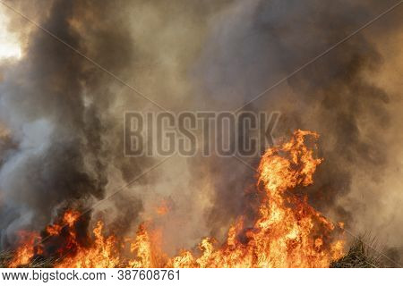 Red Raging Flame Of Fire Burn In Grass Fields, Forests And Black And White Smoke To Sky. Big Wildfir
