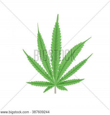 Cannabis Green Leaf Vector Illustration. Hemp Plant. For Medicine, Textile, Clothing, Cordage, Fibre