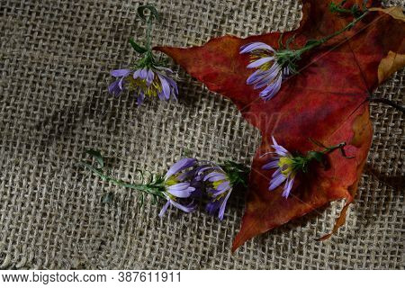 Autumn Leaf With Fading Blue Flowers On A Burlap Background. The Concept Of The Completion Of Summer