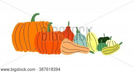 Vector Flat Set Of Various Pumpkins Isolated. Colorful Squash, Gourd And Other Vegetables. Tradition
