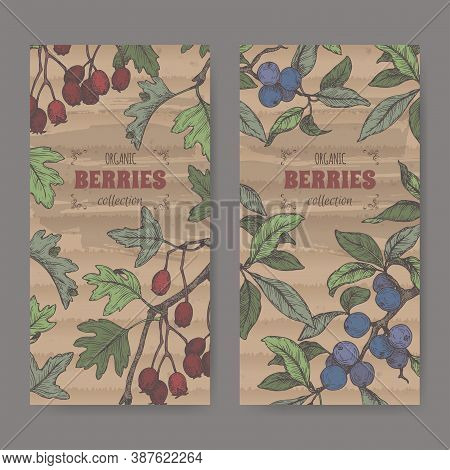 Two Labels With Hawthorn Aka Crataegus And Blackthorn Aka Prunus Spinosa Branch Color Sketch. Berry