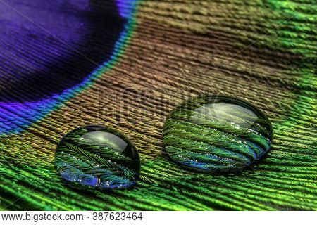 Close-up View Of A Drops Of Water On A Colored Peacock Feather