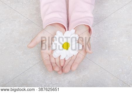 Two Children's Hands. They Have Flower Buds. Petals Are Scattered Across The Table