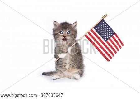 Adorable Kitten on White Holding American Flag
