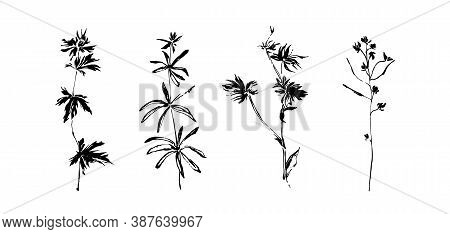 Hand Drawn Wild Plants Set. Outline Flower With Leaves Painted By Ink. Black Isolated Sketch Vector