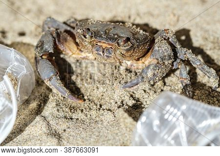 Marine Sea Crab And Plastic Glasses Waste Pollution.dirty Contaminated Ecosystem, Pollution Damage A