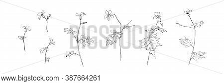 Set Of Hand Drawn Wild Flowers. Outline Buttercup Floral Collection Painted By Ink. Black Isolated S
