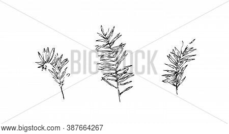 Set Of Hand Drawn Wild Equisetums. Outline Horsetail Collection Painted By Ink. Black Isolated Sketc
