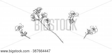 Hand Drawn Blossom Branch. Outline Flowers Painted By Ink. Black Isolated Sketch Vector On White Bac