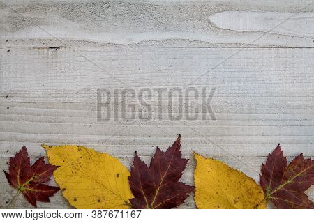 Red Maple Yellow Alder Fall Foliage On Gray Wooden Board Copy Space Flat Lay
