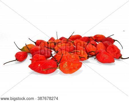 Bhut Jolokia Ghost Chili Peppers (capsicum Frutescens X Capsicum Chinense Hybrid). Interspecific Hyb