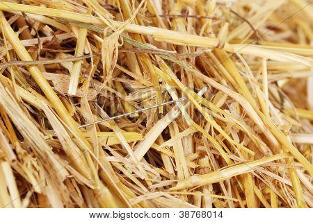Needle in a haystack close-up