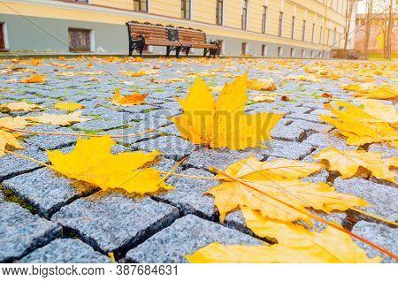 Autumn landscape. Autumn in the city park. City autumn view, park bench in autumn park. Focus at the autumn leaves. Autumn city landscape