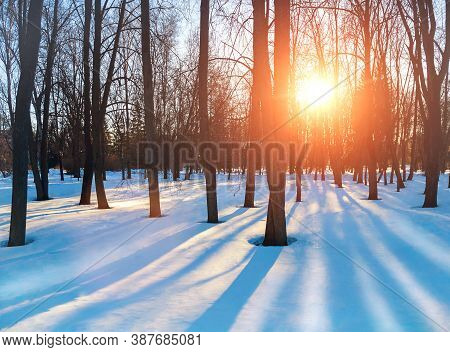 Winter park with snowy winter trees, winter snowy scene in warm soft tones. Colorful winter park in sunset light. Winter park landscape, colorful winter nature. Winter sunset background