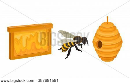 Honeybee And Hanging Beehive With Sticky Nectar Vector Set