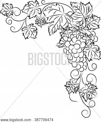 Contour Black And White Drawing Of A Vine With A Bunch Of Grapes And Flowers. Linear Grapevine Vecto