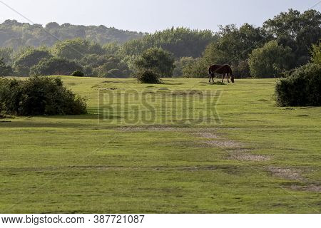 Pastureland In Sunshine In The Hampshire New Forest