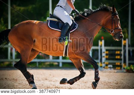 A Bay Racehorse Gallops Quickly Through The Arena, With An Experienced, Skilled Rider On Its Saddle.