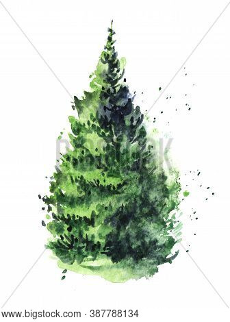 Watercolor Image Of Coniferous Fluffy Tree With Thick Pine Needles Isolated On White Background. Han