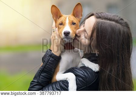 Young Pretty Woman Is Hugging, Holding On Hands And Kissing Her Basenji Pedigree Dog At Sunny Day